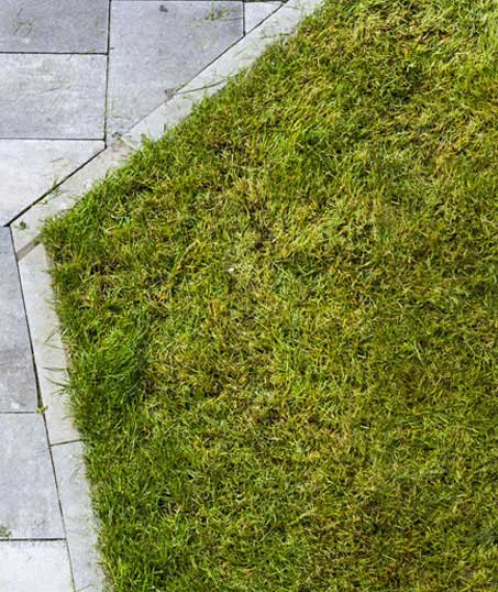 Old Dominion Landscapes, LLC. Lawn Dethatching